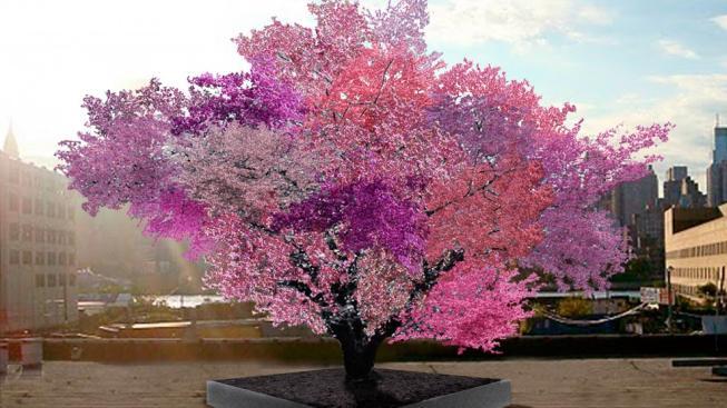Strom, kvetoucí čtyřiceti druhy ovoce