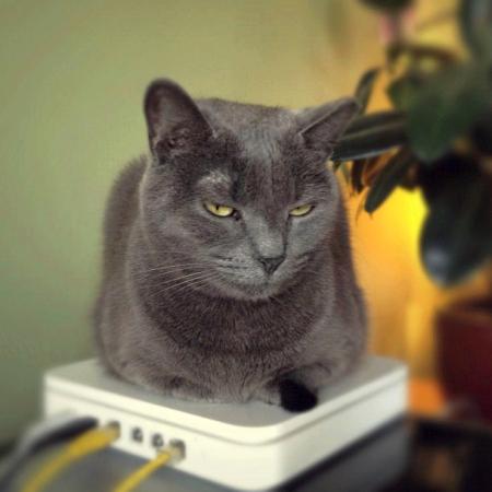 Kočka na routeru