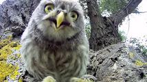 Soví mláďátka zaujala filmová kamera
