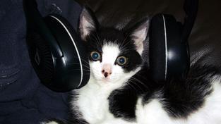 Skvělé album, dávám pět myšiček z pěti!