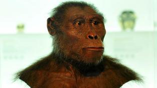 Jedinec z druhu Australophitecus afarensis, jehož lebka byla objevena už v 70. letech minulého století