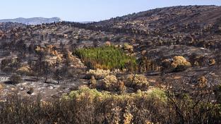 Zelená oáza uprostřed spaleniště