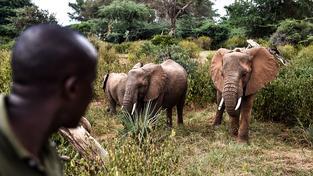 Keňská rezervace Samburu. Ilustrační snímek