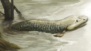 Tiktaalik, devonská nozdratá ryba považovaná za spojovací článek mezi rybami a tetrapody