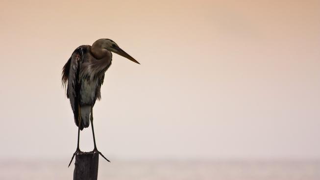 Mořští ptáci z příbuzenstva fregatek sice zvládnou letět bez odpočinku neskutečně dlouho, sem tam si ale přece jen dopřejí pauzu
