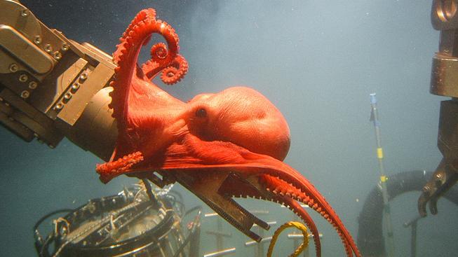 Chobotnice o vybavení výzkumníků amerického Národního úřadu pro oceán a atmosféru (NOAA)