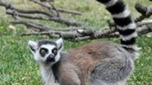 Safari ve Dvoře Králové otevře venkovní výběhy