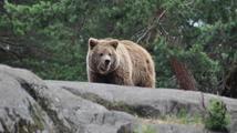 Televizní medvědi z Berouna oslavili jedenácté narozeniny