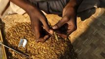 V Kongu děti šňupají práškový tabák jako lék proti rýmě