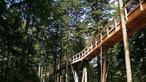Stezka korunami stromů u Lipna uvítá první návštěvníky již dnes