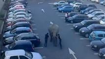 Z cirkusu utekl slon. Udělal si výlet do obchoďáku