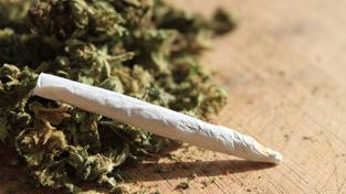 Marihuana (ilustrační foto)