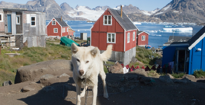 Pes z vesnice Kulusuk