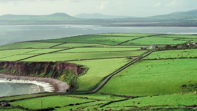 Irská zeleň