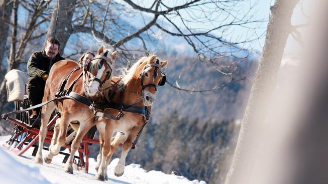 Vyjížďka na saních tažených koněm(c) Mostviertel Tourismus_weinfranz