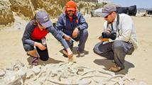 V Chile našli dochované kostry velryb staré pět milionů let