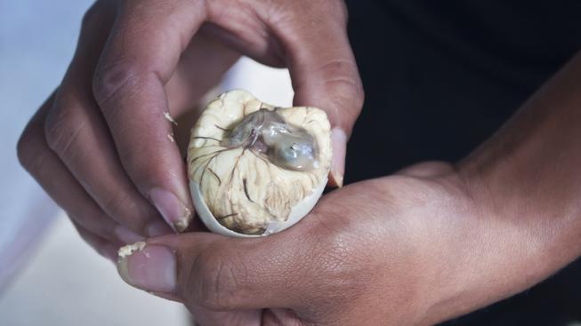 balut, kachní embryo, specialita