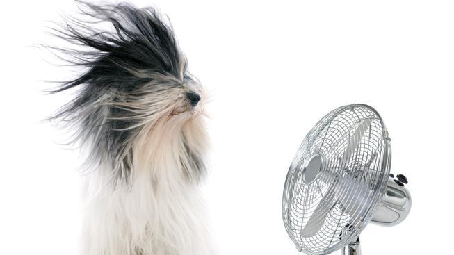 větrák, pes