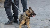 Policie hledá bombu na koleji pardubické univerzity