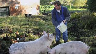 Čeští zemědělci mohou peníze použít na prevenci proti nakažlivým nemocem u prasat a drůbeže