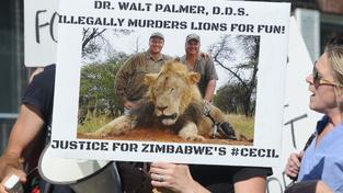 Ve Spojených státech lidé podepisovali petici za vydání Palmera do Zimbabwe