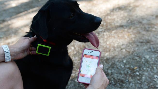 Díky GPS můžete vystopovat svého ztraceného domácího mazlíčka