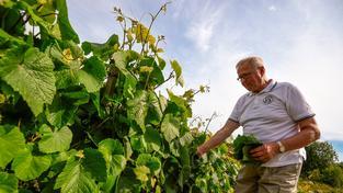 Kaarlo Nelimarkka je hrdý na to, že jeho vinice je zřejmě nejseverněji položená na světě