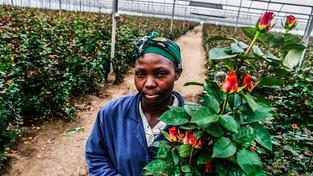 Keňa ročně vyveze téměř 137 tisíc tun řezaných květin