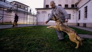 Trestanci v maďarské věznici vychovávají psy a učí se tím zároveň sami kázni