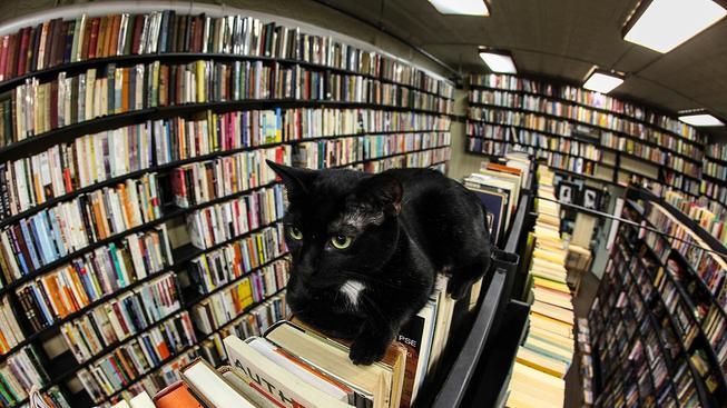 Milovníci koček (nebo literatury) by určitě hlasovali pro micinu do každé knihovny