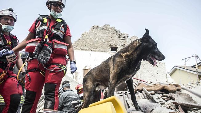 Záchranáři se psy vycvičenými pro pátrání po zavalených osobách hledají v troskách přeživší