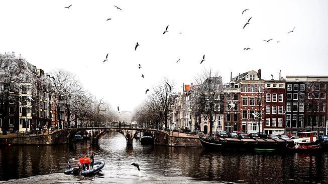 Tuleň jménem Robbie v řece tekoucí přes Amsterdam