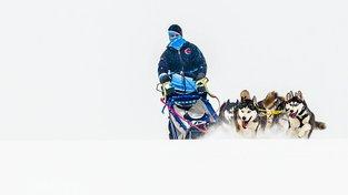 Češi patří v závodech psích spřežení mezi světovou špičku. Ilustrační snímek