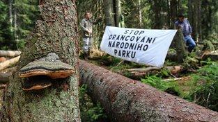 Tak protestovali aktivisté před několika lety proti kácení lesů na Šumavě kvůli kůrovci. Ilustrační snímek