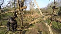 Opičí útok na dron