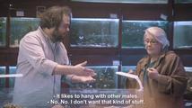 Co byste dělali, kdyby vám v obchodě nabídli homosexuální želvu?