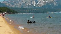 Medvědice vzala svá medvíďata vykoupat k jezeru
