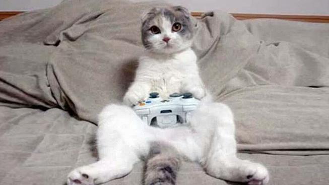 kočka na gauči