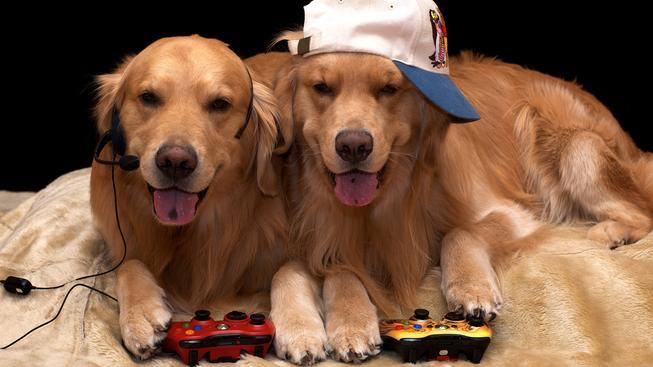 12 nejlepších psů ve hrách