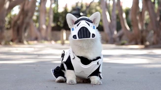 Winston - ten nejroztomilejší stormtrooper na světě