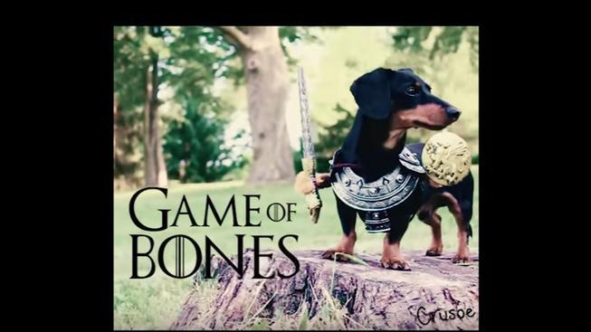 Game of Bones – Hra o trůny, kde hraje roztomilý jezevčík