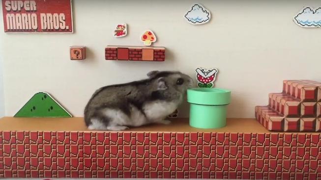 Roztomilý křeček dokončil první level v Super Mario Bros