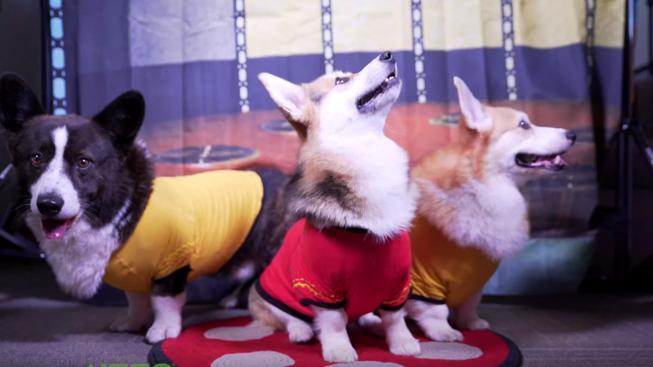 Star Trek v podobě roztomilých psíků je rozhodně to, co potřebujete