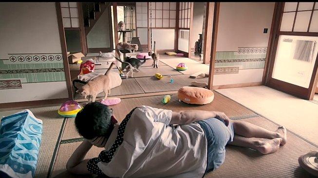 Neko Atsume bude konečně film podle hry, který za něco stojí!