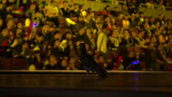 Při finále ve hře League of Legends vlétl na pódium holub