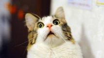 Kočka ukradla stream pro sebe – podívejte se na humornou scénku