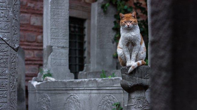 Domestikace koček: Jak se z divoké šelmy stal náš mazel?