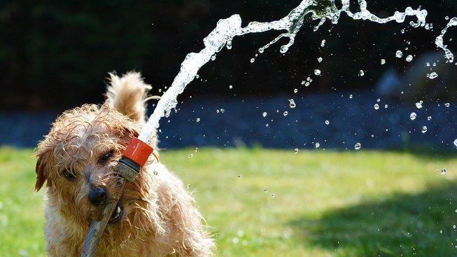 Mazlíčci a horko: Jak jim pomoct zvládnout léto