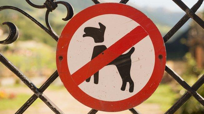 Jak si sehnat pronájem, když máte psa nebo kočku