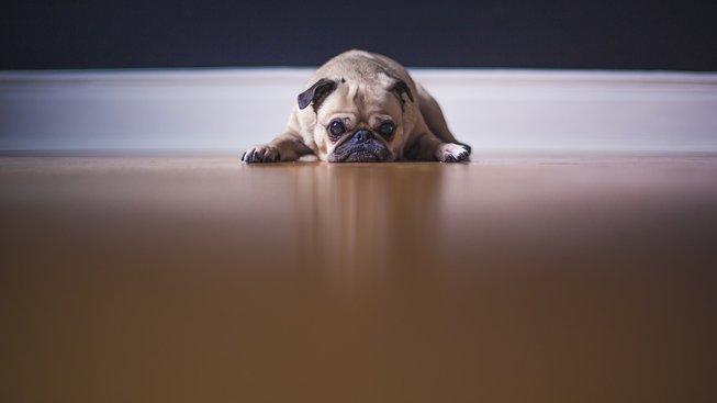 Zvířecí bolest jménem separační úzkost